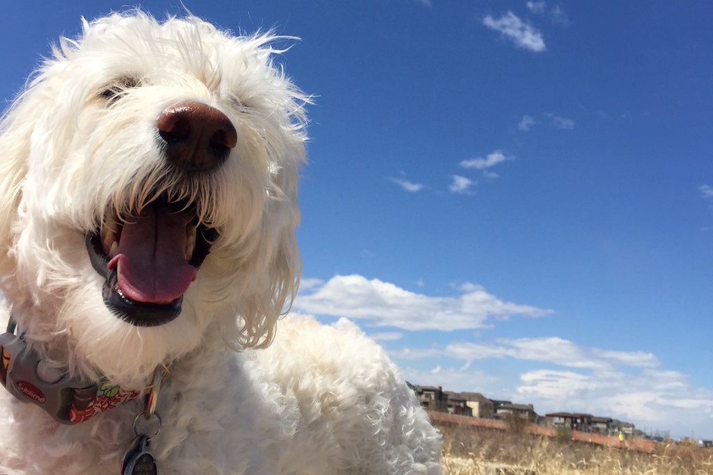 The 9 Happiest Dogs on Instagram!