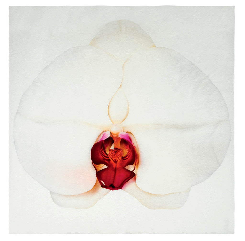 Silk Scarf - White Orchid