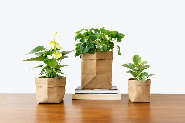 So You Have a New Plant Baby - House Plants Delivery Toronto - JOMO Studio