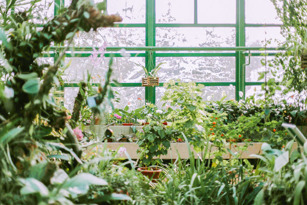 How to Care for Your Plants in the Winter - Toronto - JOMO Studio