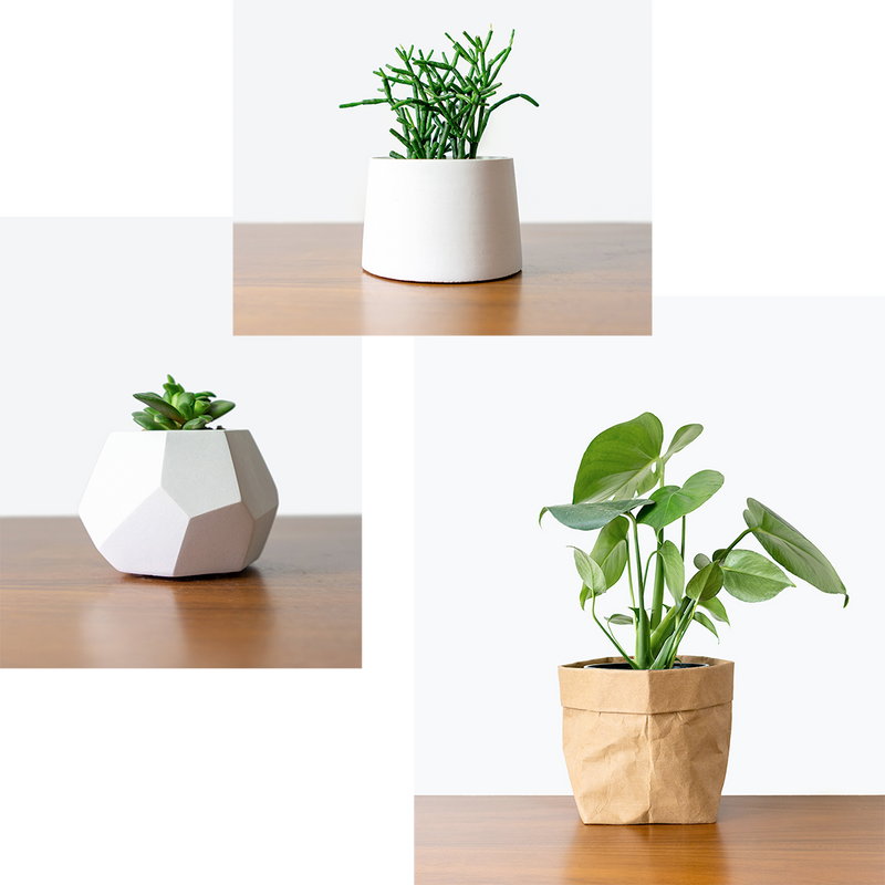 JOMO Studio: DIY Workshops and House Plants Delivery Toronto