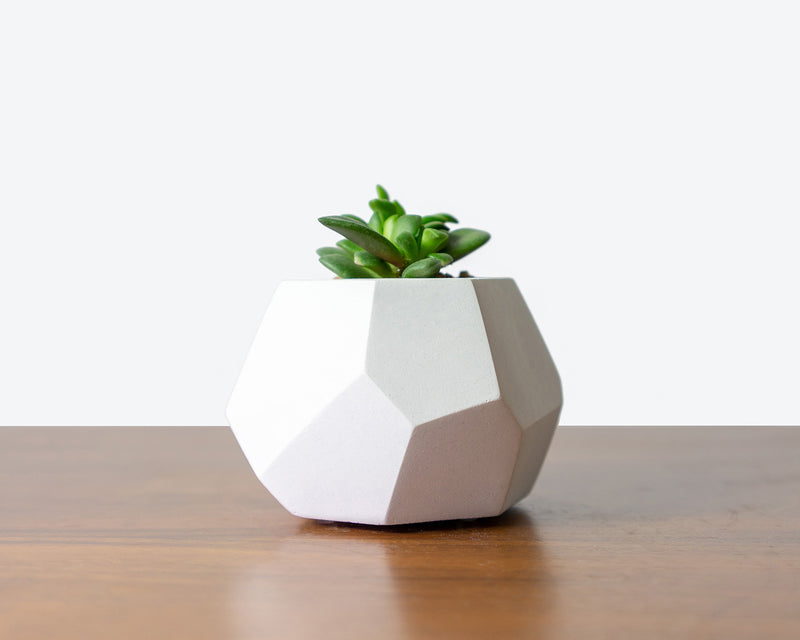 DIY Workshops and House Plants Delivery Toronto - JOMO Studio