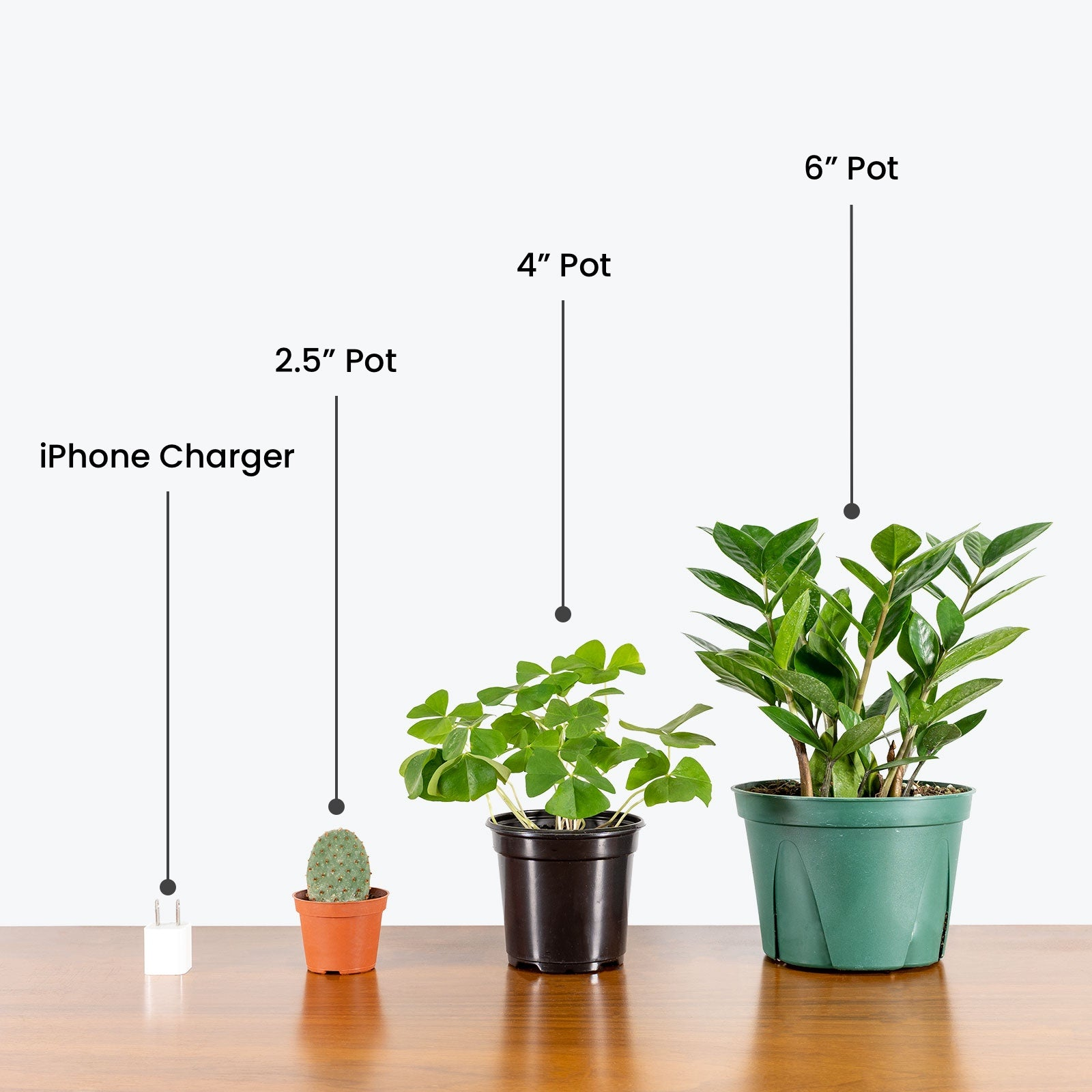 Plant size guide - House Plants Delivery Toronto - JOMO Studio
