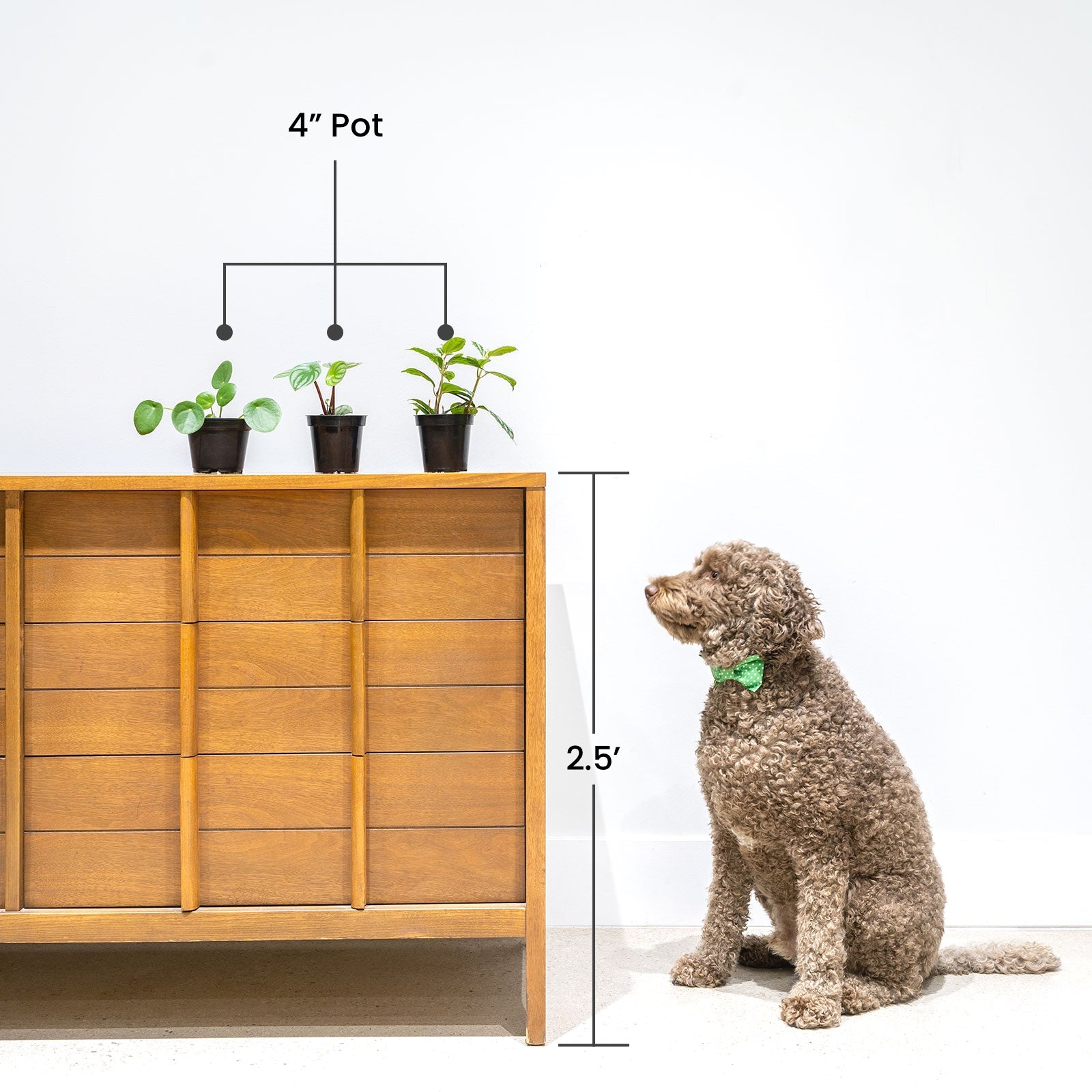 Plant size guide with Gosling - House Plants Delivery Toronto - JOMO Studio