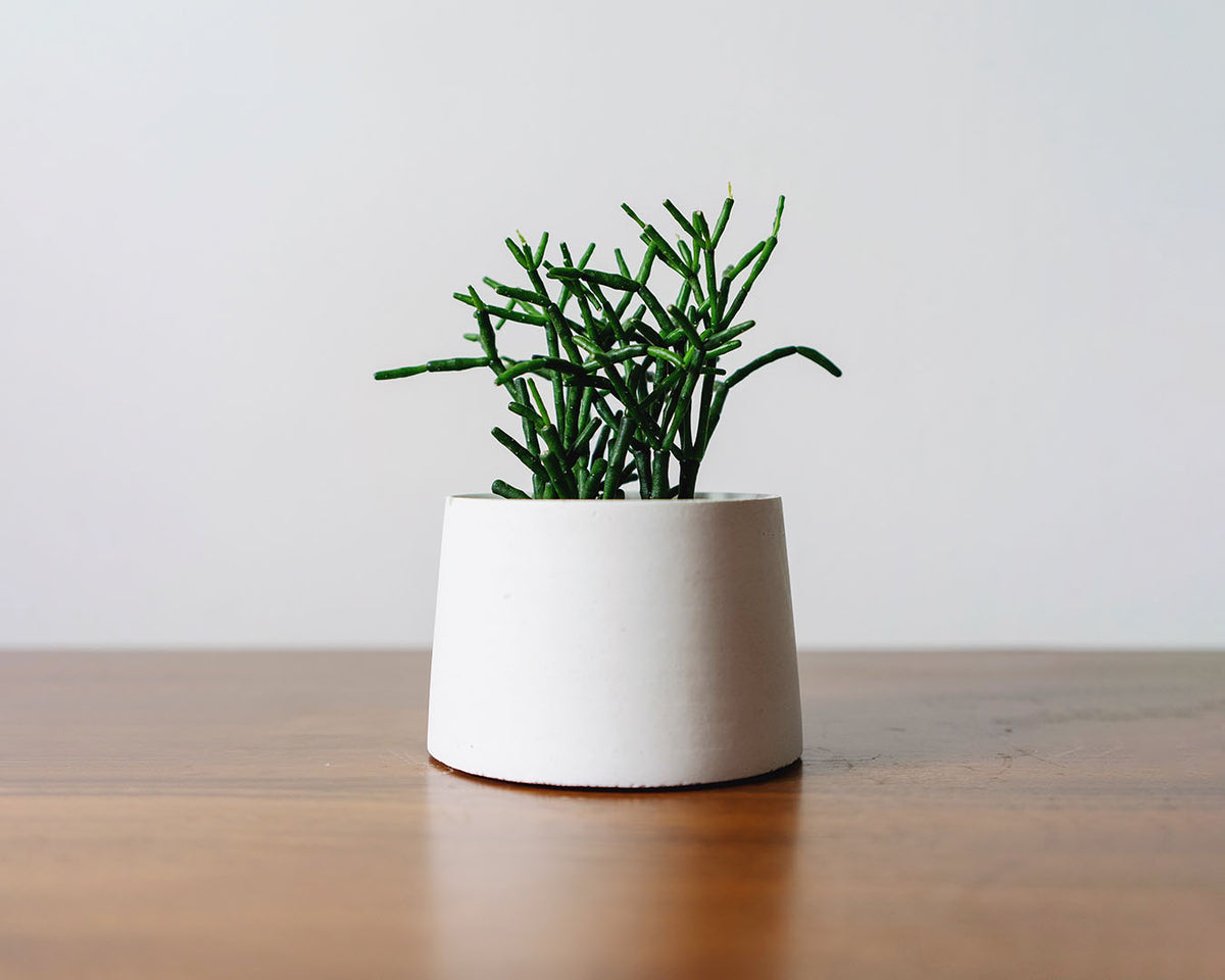 Custom Gifts Toronto - JOMO Studio | Concrete Design - Toronto - Succulent and Concrete Planter Making Workshop - Make Your Own Concrete Coaster Workshop - Concrete and Candle Making Workshop - Hand Made Concrete Goods