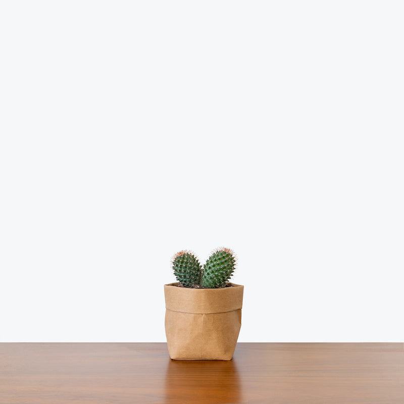 Barrel Cactus - House Plants Delivery Toronto - JOMO Studio