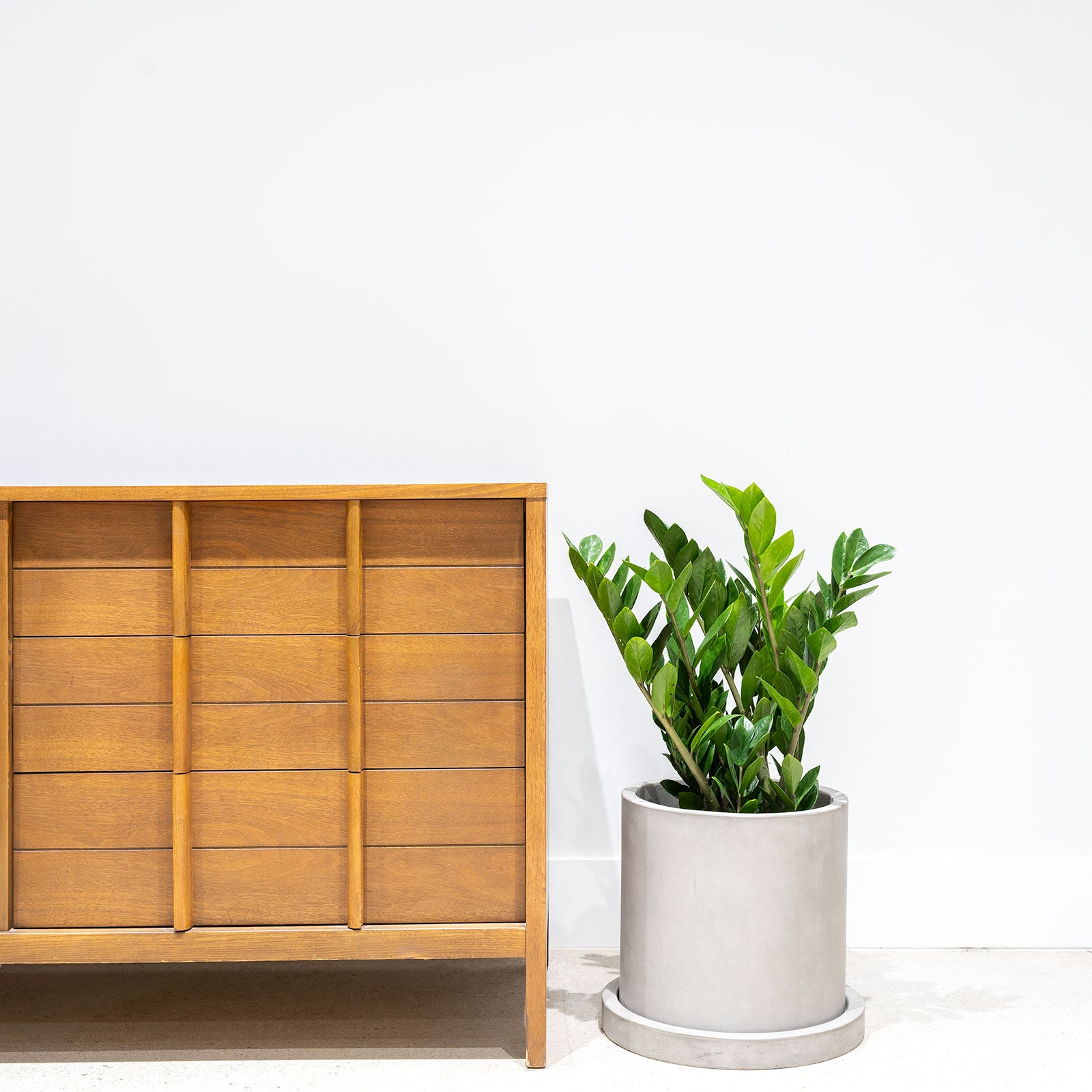 How to Take Care of Your ZZ Plant - House Plant Delivery Canada - JOMO