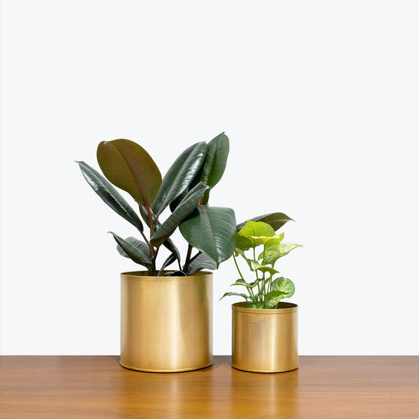 Golden Metal Planter - House Plants Delivery Toronto - JOMO Studio