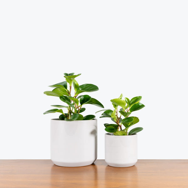 Grey Ceramic Planter - House Plants Delivery Toronto - JOMO Studio