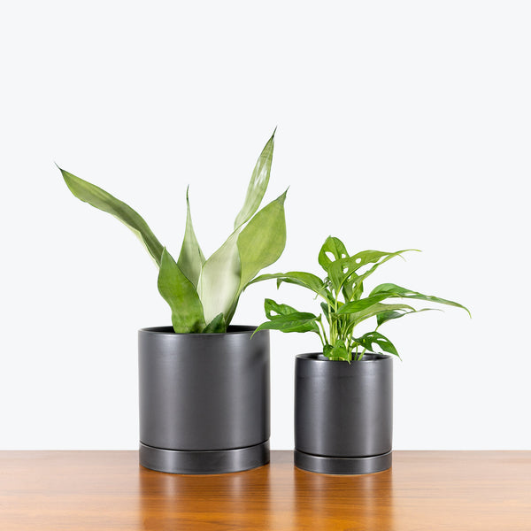 Modern Ceramic Planter with Saucer - House Plants Delivery Toronto - JOMO Studio