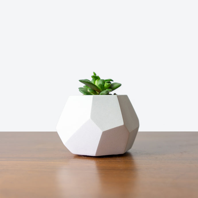 Toronto Succulent and Concrete Planter Making Workshop - JOMO Studio