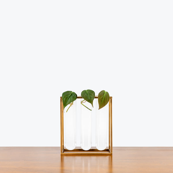 Sprout Propagation Station - House Plants Delivery Toronto - JOMO Studio