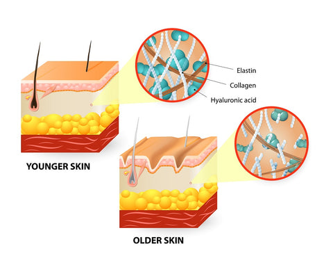 Aging skin causes loss of collagen which fades tattoos