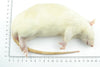 Jumbo Rat 3 per pack (10wks+/300g+) - Fuzzy Fox Reptiles and Rodents