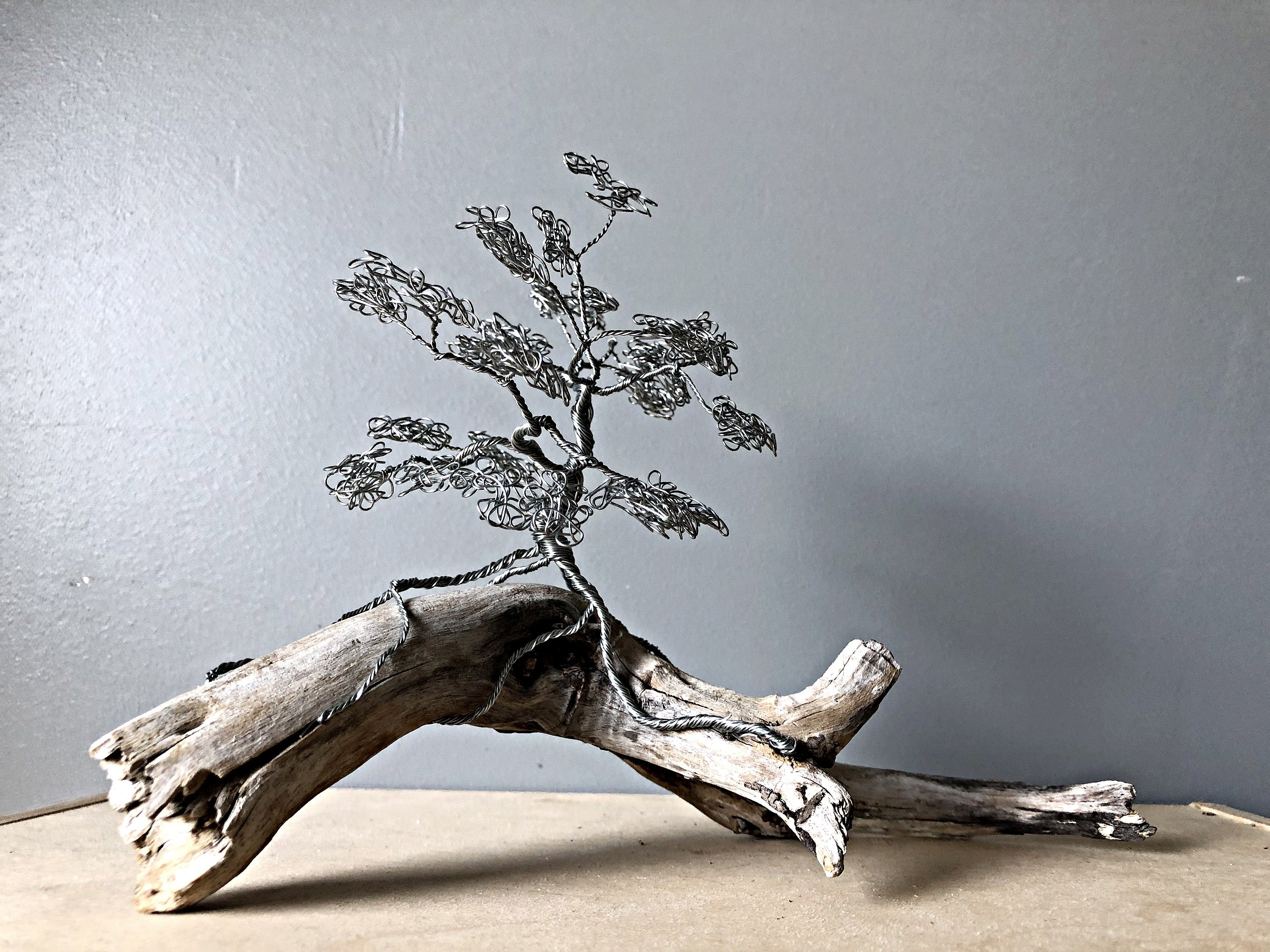 Silver Bonsai Tree