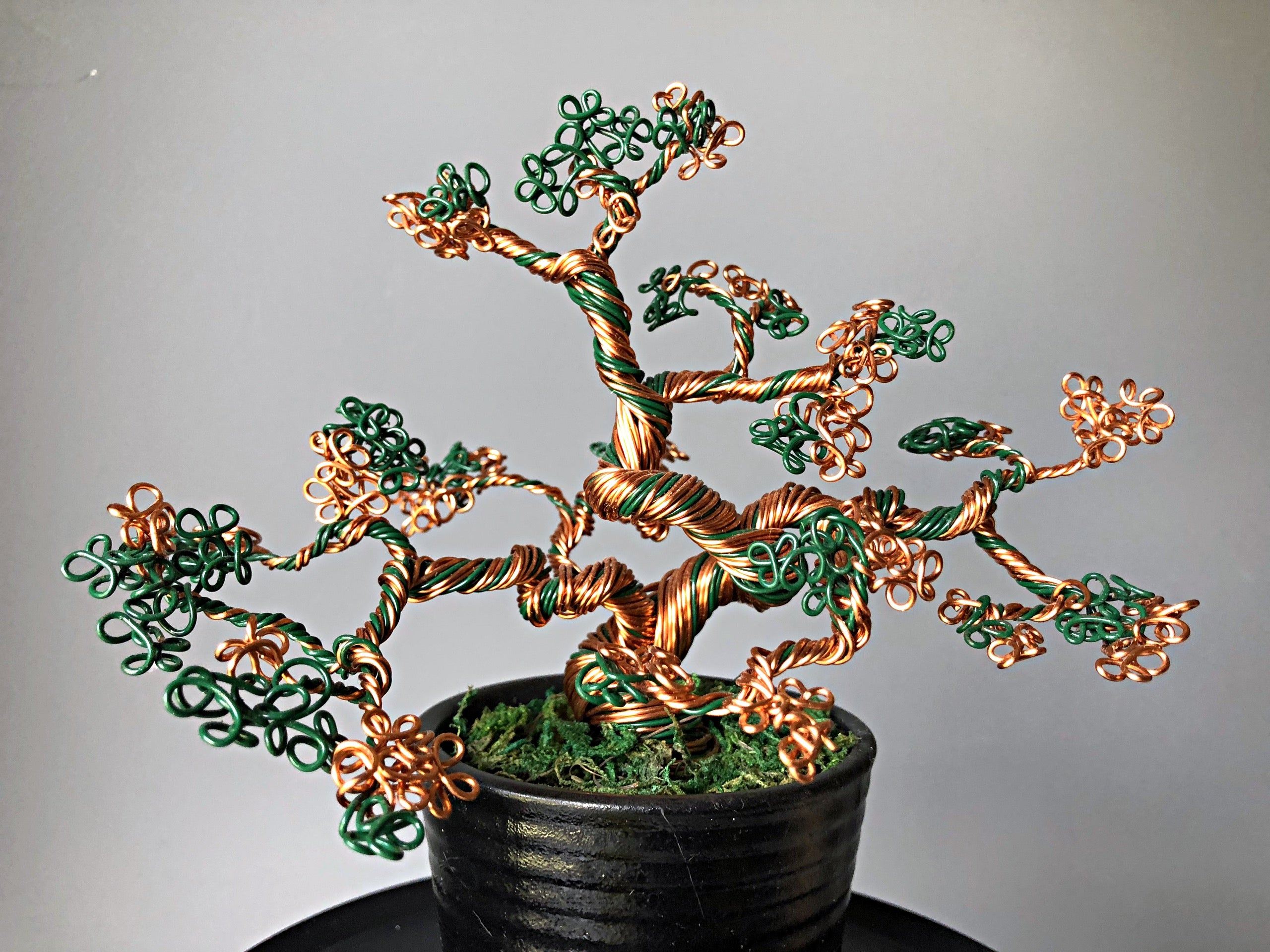 Green & Gold Bonsai Trees