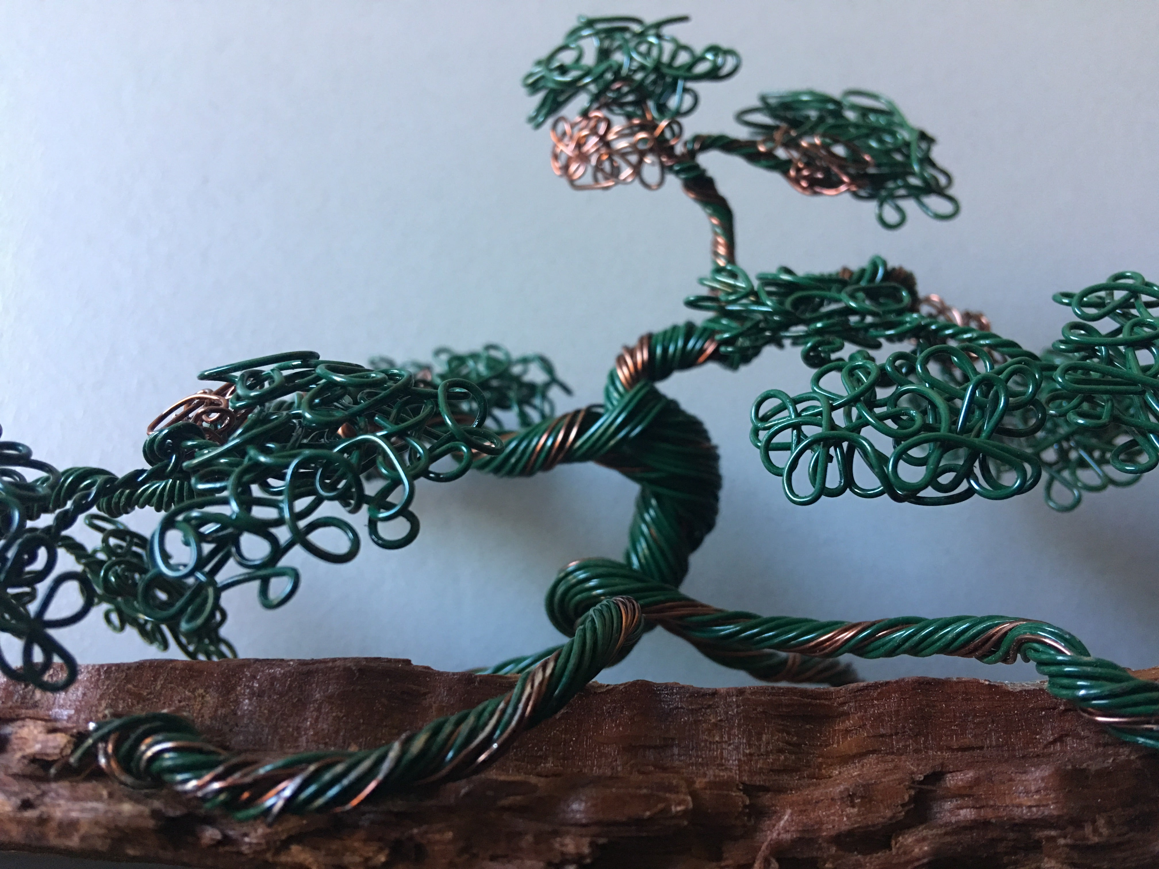 Green and Bronze Bonsai on Wood