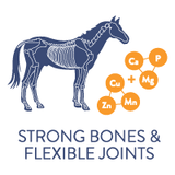 strong bones and flexible joints