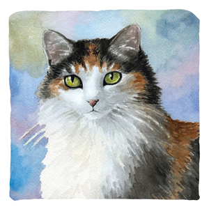 Cat 572 Calico cat Throw Pillows