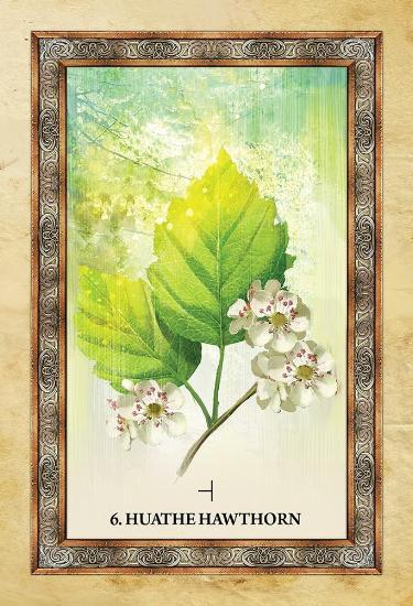 Celtic Tree Oracle Oracle Deck