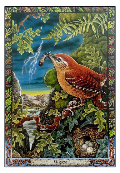 Druid Animal Oracle Deck Oracle Deck