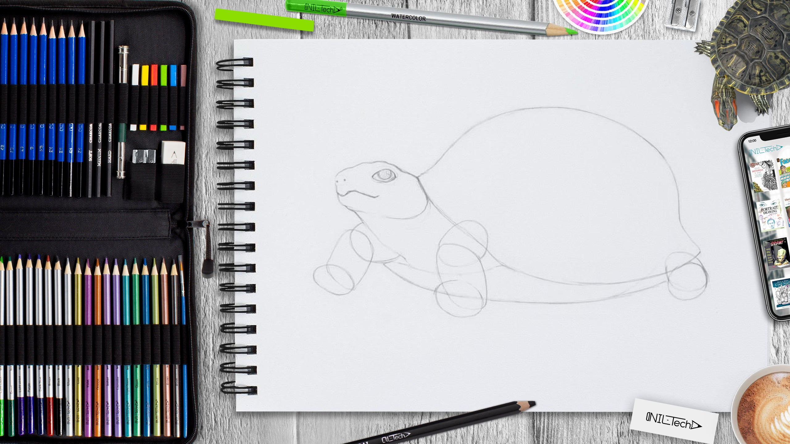 learn to draw a turtle step by step