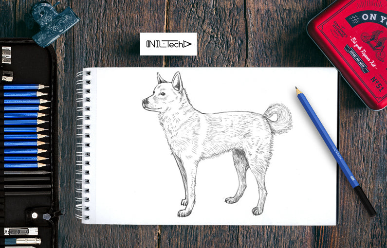 how to draw a husky