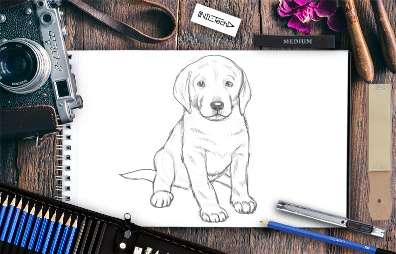 How to draw a Labrador Puppy step by step tutorial