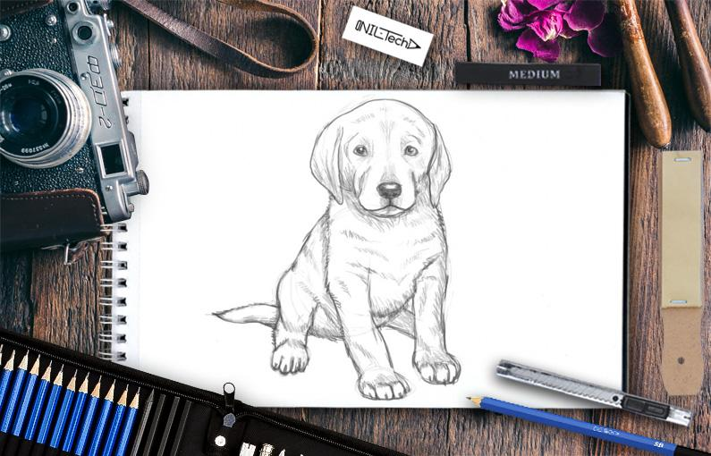 The easy way to draw a dog Labrador Puppy
