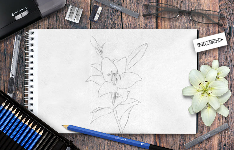 How to draw Lily