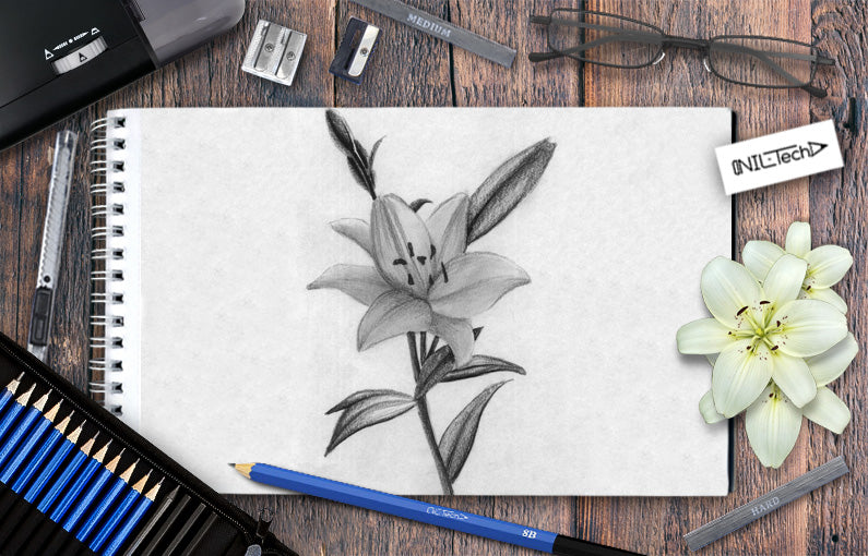How to draw Lily flower step by step tutorial