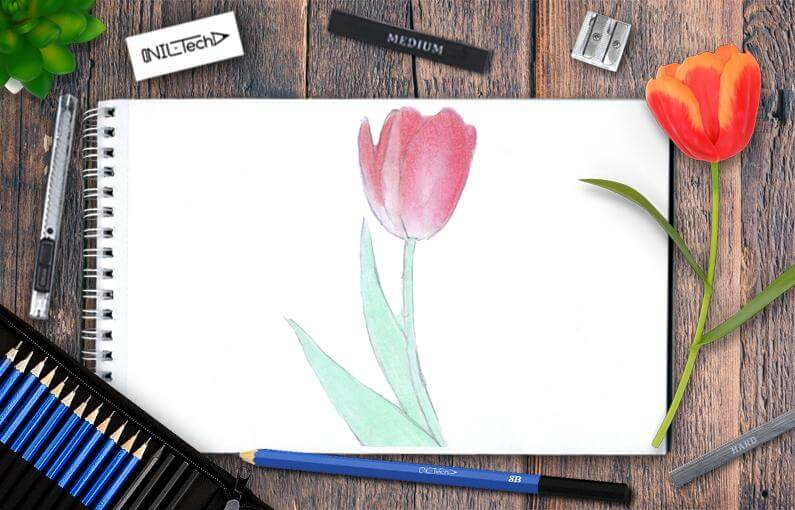 how to draw flower tulip step by step tutorial