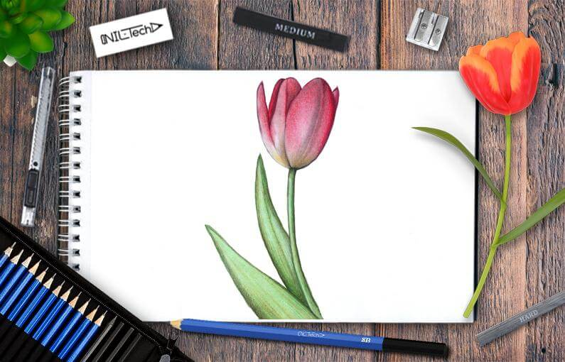 How to draw tulip step by step
