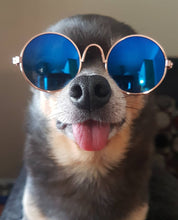 Load image into Gallery viewer, Designer Dog Sunglasses
