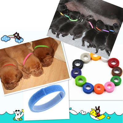Newborn Adjustable Puppy ID Collar