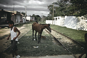 Cuba In Waiting Horse On Railway Track