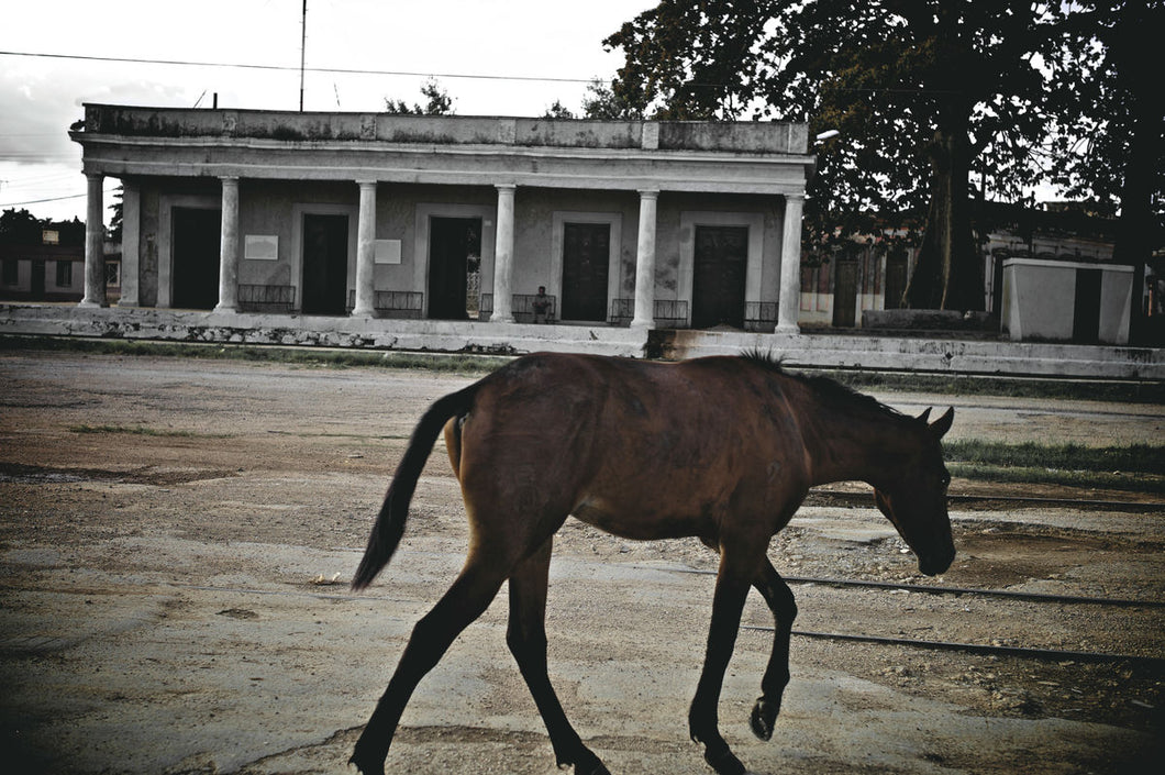 Cuba In Waiting Horse At Railway Station