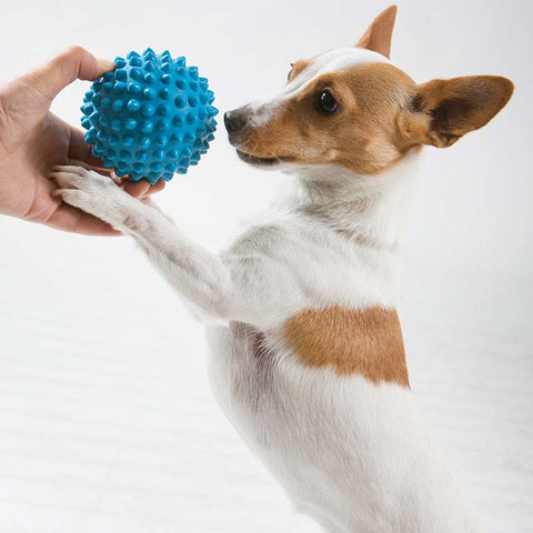 Aussie Dog Blue Catch Ball, Interactive Play for You & Your Best Friend