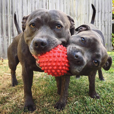 Aussie Dog Red Catch Ball, Great for Interactive Fetch Games