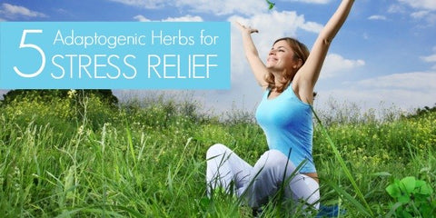 Stressed? These 5 Adaptogenic Herbs Can Ease Stress