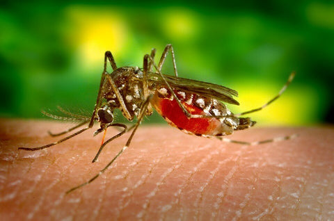 Back-off Bugs: Ward off Mosquitos naturally
