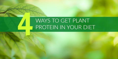 4 Ways to Get More Plant Protein in Your Diet