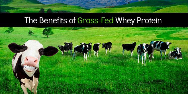 Grass Fed Whey Protein NZ Benefits