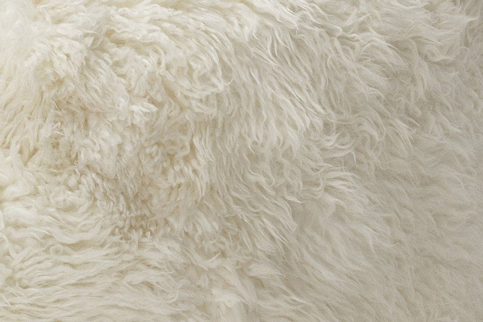 White Sheepskin closeup