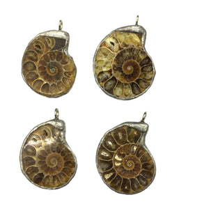 Ammonite Pendant 25X35mm