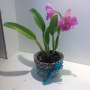 Purple potted orchid