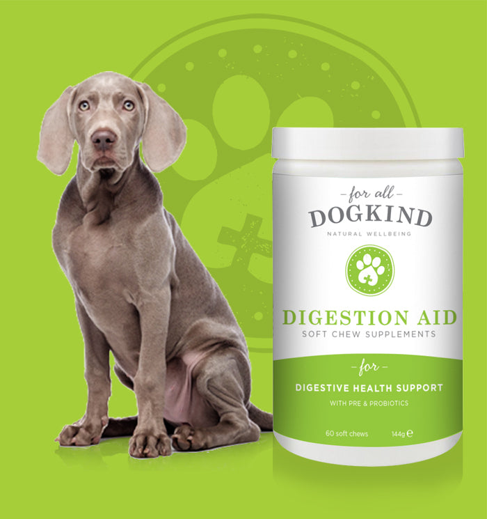 DIGESTION AID SOFT CHEW SUPPLEMENTS - TRADE