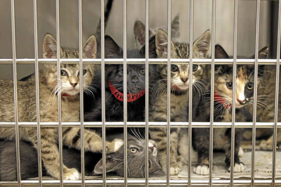3 Ways to Save and Improve the Lives of Shelter Animals