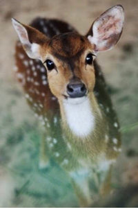 40 x 60 full square diamond painting TLS-6471 deer