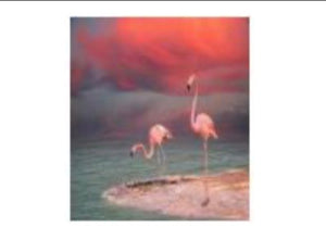 50 x 60 full square drill diamond painting - TA1644 - flamingo!